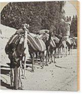 Syria: Caravan, C1900 Wood Print