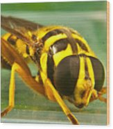 Syrphid Eye To Eye Wood Print