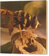 Syrphid Fly On Fossil Crinoid Wood Print
