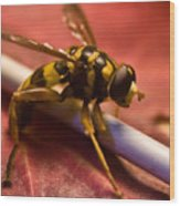 Syrphid Fly Poised Wood Print
