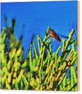 Syrphid Fly  Wood Print