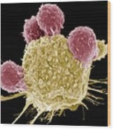 T Lymphocytes And Cancer Cell, Sem Wood Print by Steve Gschmeissner