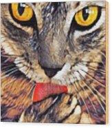 Tabby Cat Licking Paw Wood Print