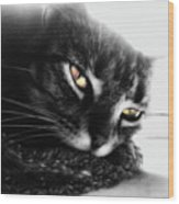 Tabby Cat Selective Color Wood Print