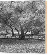 Tables And Tree Wood Print