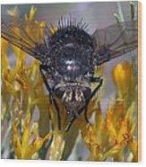 Tachinid Fly Wood Print