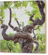 Tai Chi Vine Wood Print