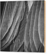 Tail Feathers Abstract Wood Print
