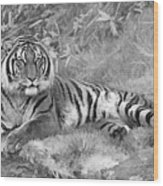 Takin It Easy Tiger Black And White Wood Print