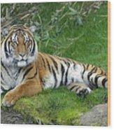 Takin It Easy Tiger Wood Print
