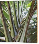 Talipot Palm Wood Print