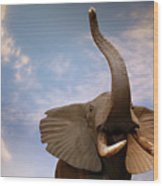 Talking Elephant Wood Print
