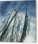 Talking Reeds Wood Print
