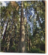 Tall And True Wood Print
