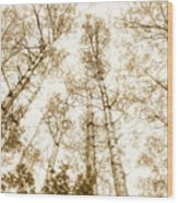 Tall Aspens Wood Print