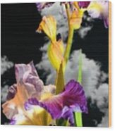 Tall Bearded Iris Wood Print