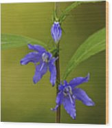 Tall Bellflower Wood Print