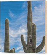 Tall Cacti Wood Print