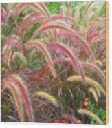 Tall, Colorful, Whispy Grasses In The Sumer Breeze Wood Print