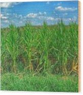 Tall Corn Wood Print