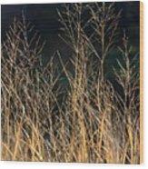 Tall Fall Grasses Wood Print