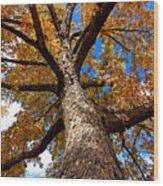 Tall Fall Tree Wood Print