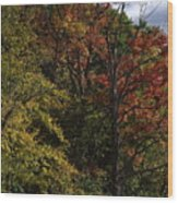 Tall Fall Trees Wood Print
