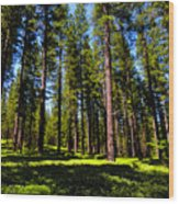 Tall Forest Wood Print