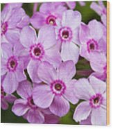 Tall Garden Phlox Wood Print