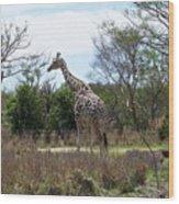 Tall Giraffe Wood Print