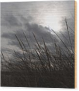 Tall Grass And The Blues Wood Print