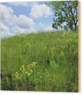Tall Grass Hillside Wood Print by Scott Kingery