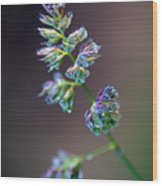 Tall Grass Stem Close-up Wood Print