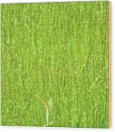 Tall Grassy Meadow Wood Print