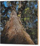 Tall Oak Wood Print
