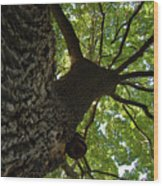 Tall Oak Wood Print