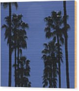 Tall Palm Trees In A Row Wood Print