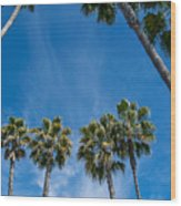 Tall Palms Meet The Sky Wood Print