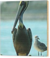Tall Pelican Wood Print
