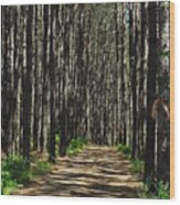 Tall Pine Lined Path Wood Print