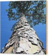 Tall Pine Tree In Summer Wood Print