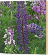 Tall Purple Luppin Wood Print
