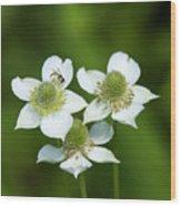 Tall Thimbleweed Dsmf0228 Wood Print