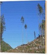 Tall Timbers Wood Print by Jim Thomson