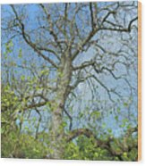 Tall Tree Wood Print