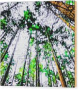 Tall Trees To The Sky Wood Print