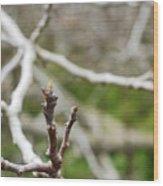 Talon Branch Wood Print