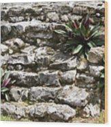 Talum Ruins Plant Life Wood Print