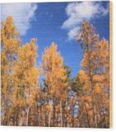 Tamarack Grove Wood Print