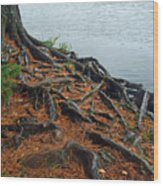 Tamarack Needles Wood Print
